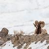0831_Yellowstone_02022019