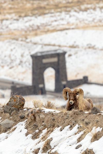 0867_Yellowstone_02022019