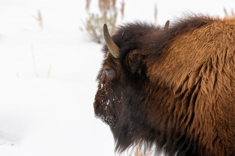 1764_Yellowstone_01312019