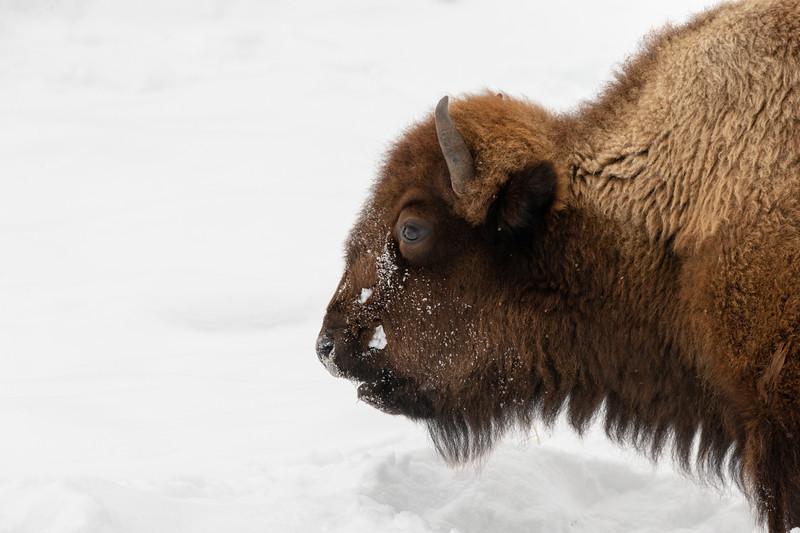 1314_Yellowstone_01312019