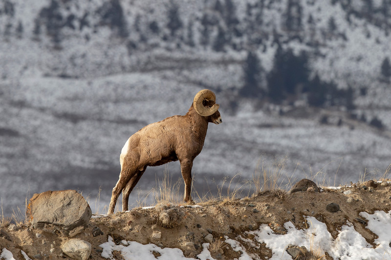 1570_Yellowstone_02022019