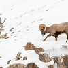 0693_Yellowstone_01312019