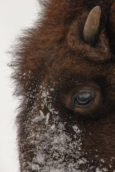 1663_Yellowstone_01312019