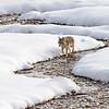 1135_Yellowstone_01272019