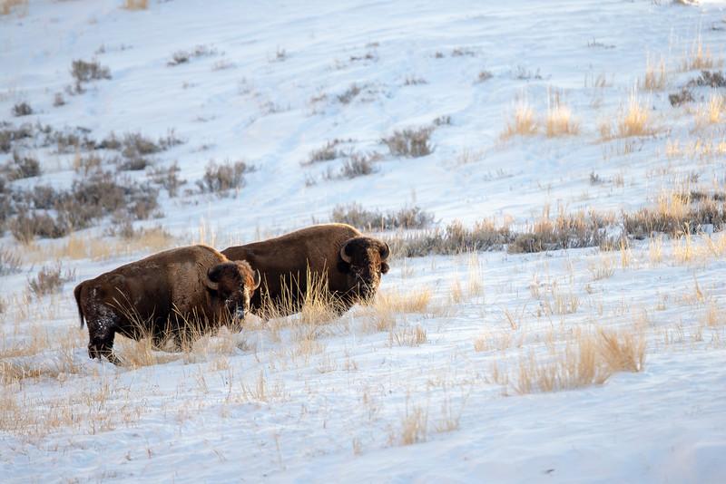0900_Yellowstone_02012019