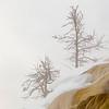 0510_Yellowstone_02022019