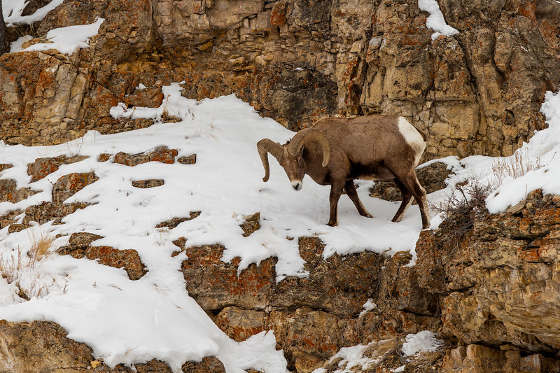0908_Yellowstone_01312019