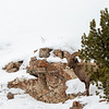 0595_Yellowstone_01312019