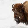 1337_Yellowstone_01312019