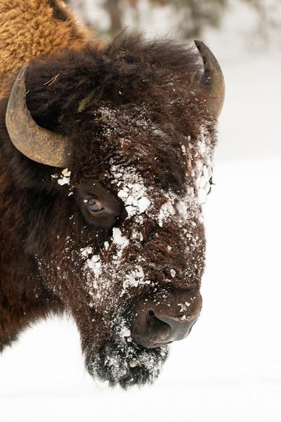 0106_Yellowstone_01262019