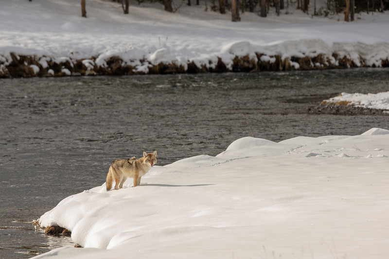 0871_Yellowstone_01272019