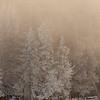0107_Yellowstone_01292019