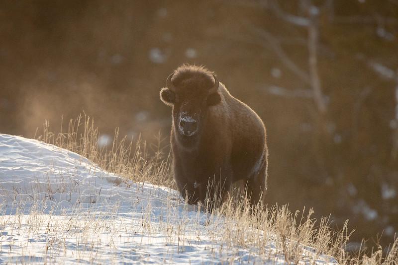 1065_Yellowstone_02012019
