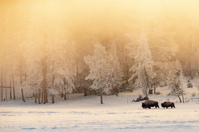 0096_Yellowstone_01292019