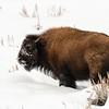 1769_Yellowstone_01312019