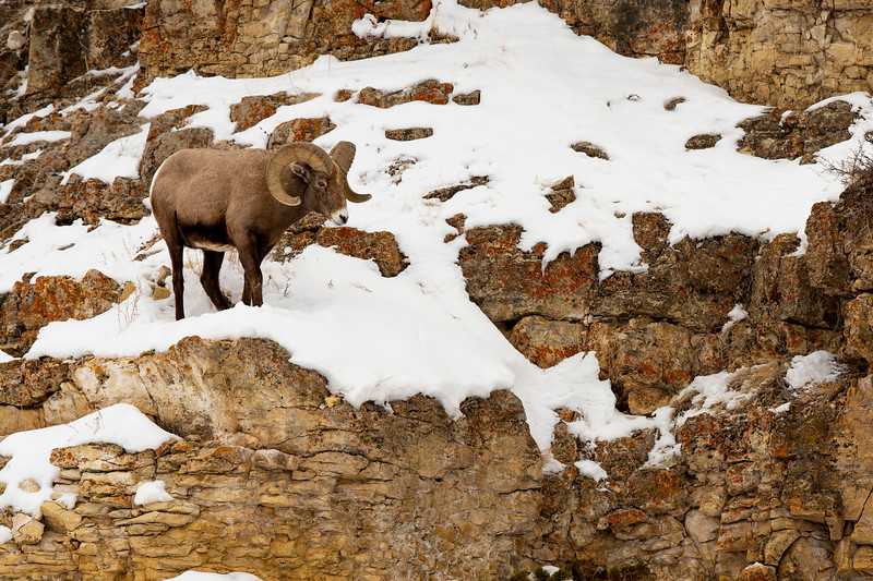 1056_Yellowstone_01312019
