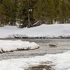 0788_Yellowstone_01272019