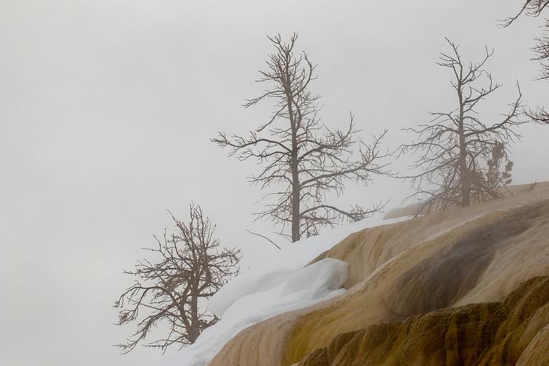 0508_Yellowstone_02022019