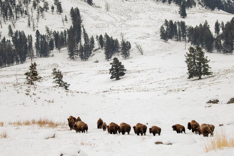0021_Yellowstone_01302019