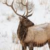 3040_Yellowstone_02032019