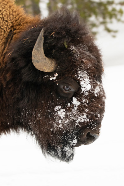 0116_Yellowstone_01262019