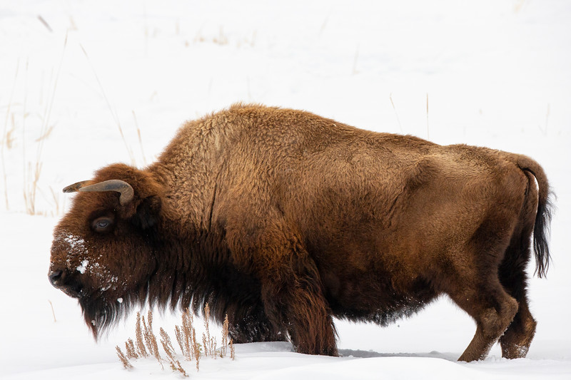 1700_Yellowstone_01312019