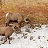 0416_Yellowstone_01312019