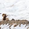 0820_Yellowstone_02022019
