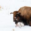 1690_Yellowstone_01312019