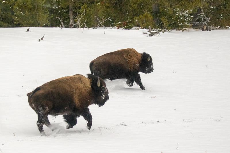 0351_Yellowstone_01262019
