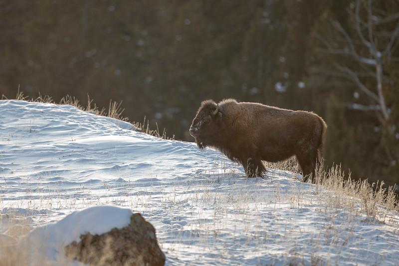 0986_Yellowstone_02012019
