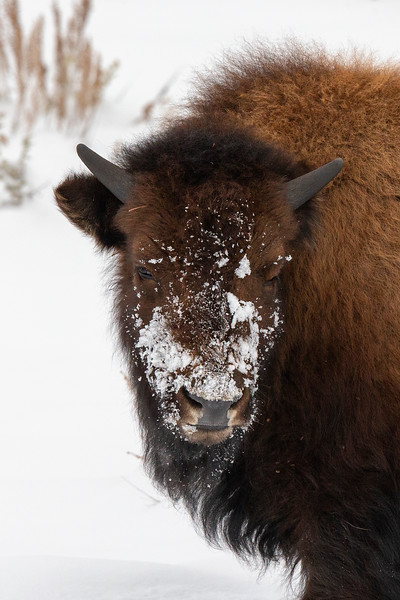 1792_Yellowstone_01312019