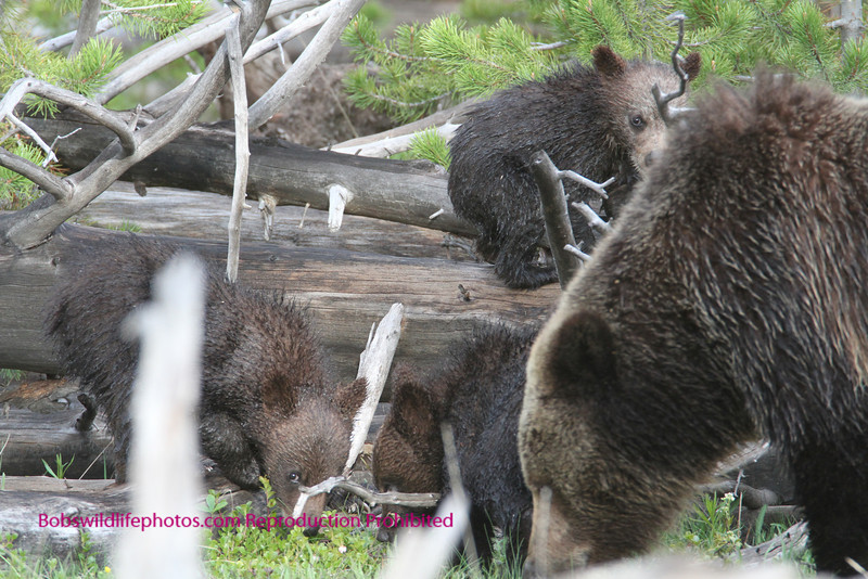 In this photos near indian creek, you can see 3 of the 4 as well as mom.