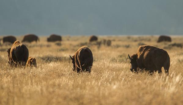 Onto Pastures New