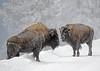 699_Yellowstone_01152017-2
