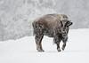 676_Yellowstone_01152017