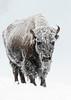 229_Yellowstone_01162017