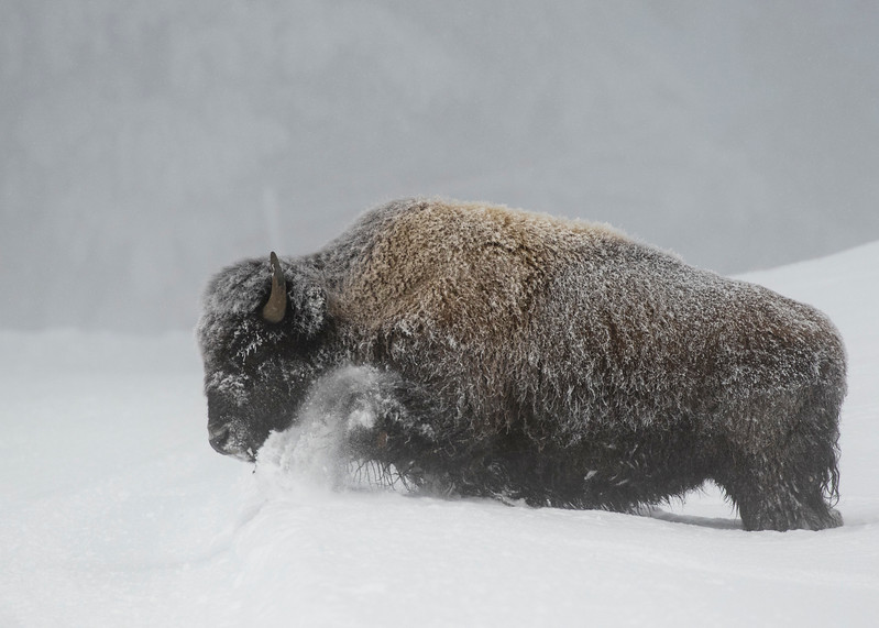 731_Yellowstone_01152017