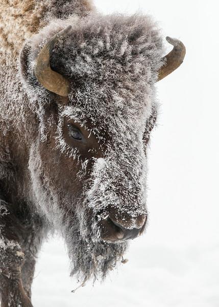 197_Yellowstone_01162017