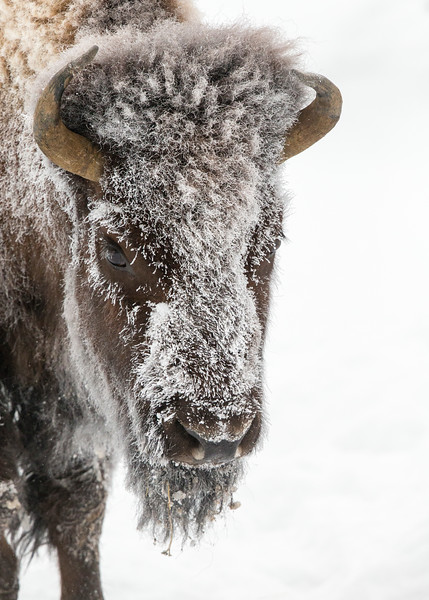201_Yellowstone_01162017