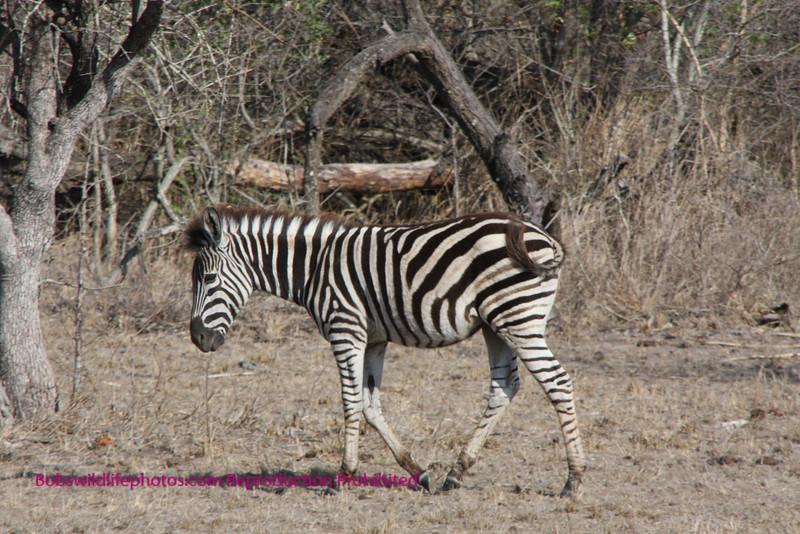 Kruger Park South Africa