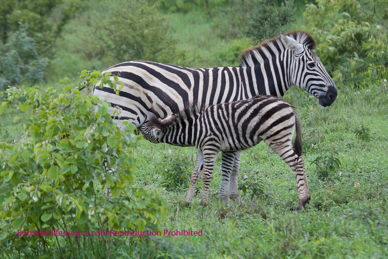 Time for lunch. Taken near Nkorho. Kruger Park South Africa