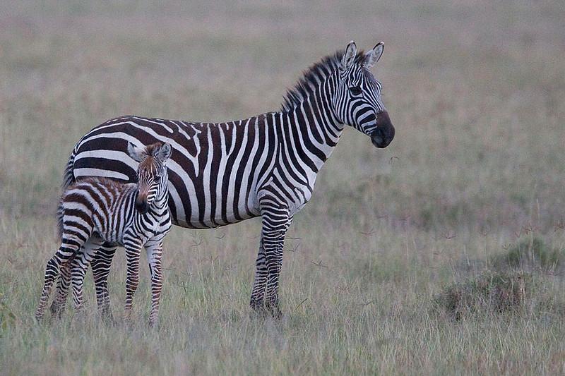 2007 07 22 Lake Nakuru 005