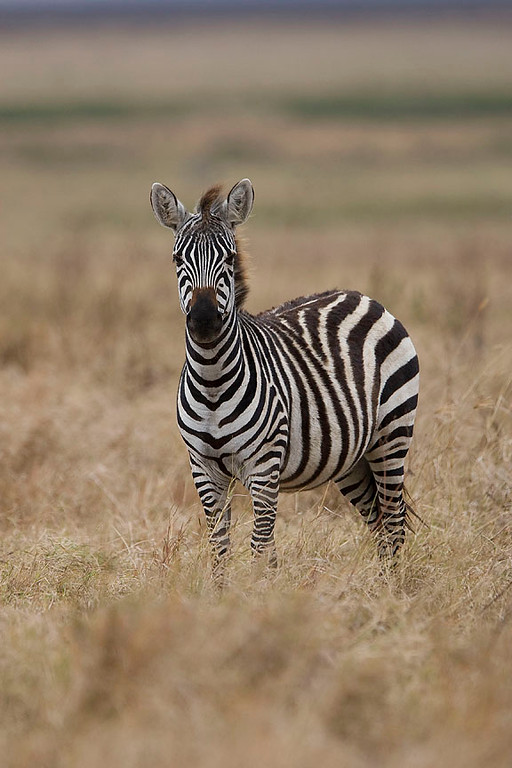 2007 07 18 Ngorongoro 208