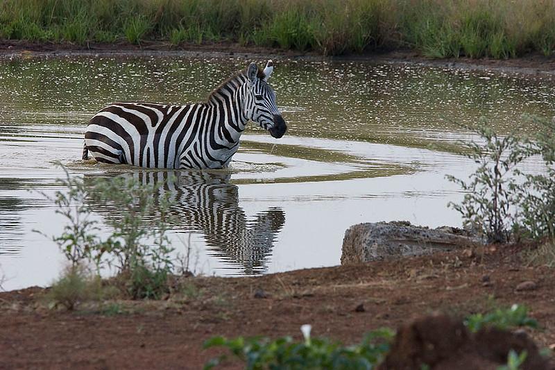 2007 07 26 Masai Mara 047
