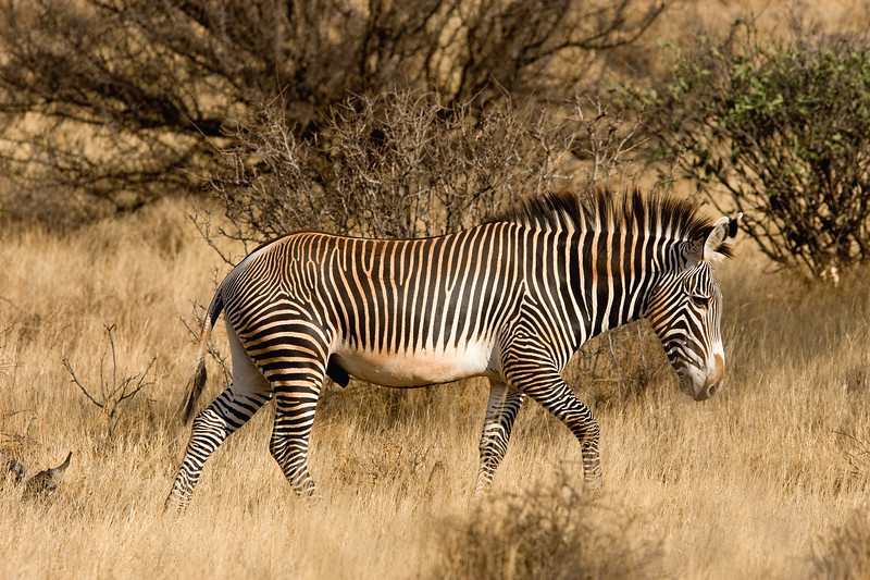 20100903_Samburu_0044
