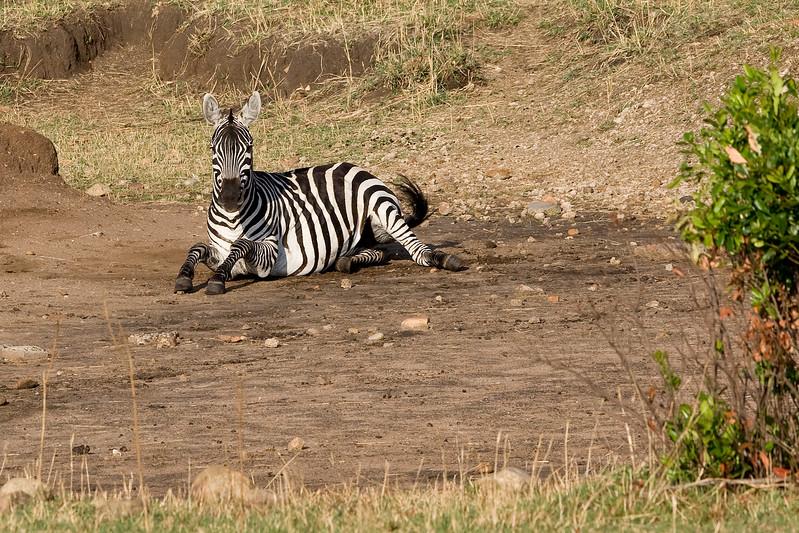 20100910_Maasi Mara_400
