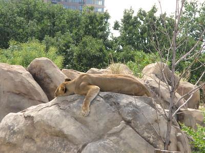 CO 2010 09 Denver Zoo 104