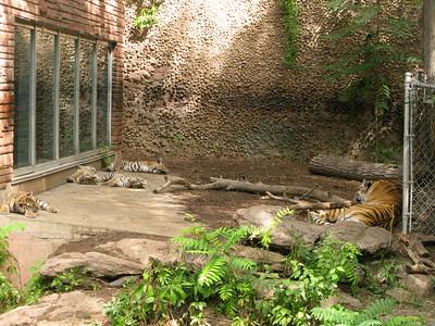CO 2010 09 Denver Zoo 119
