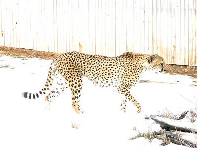 CO 2010 01 Denver Zoo (5)